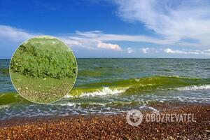 Цветение воды в Черном море показали из космоса