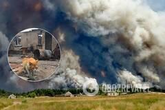 Люди остались без ничего, эвакуации не было: что происходит в эпицентре пожаров на Луганщине