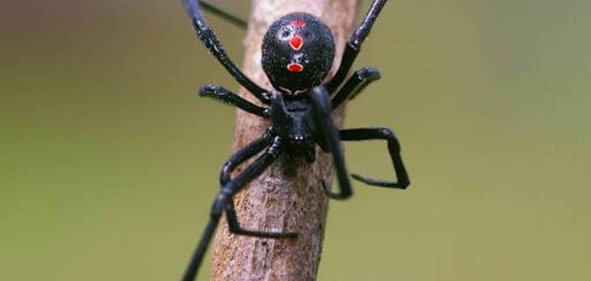 На Херсонщине туристку из Киева укусил смертельно опасный паук
