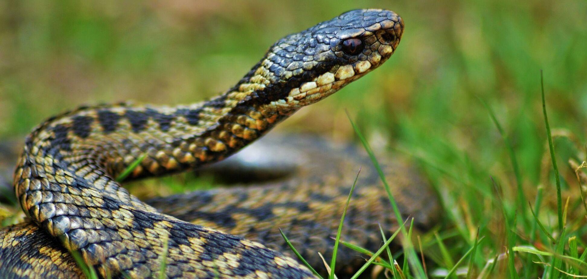 У Дніпрі біля житлового будинку виловили метрову змію. Фото