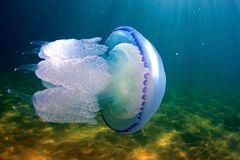Медузы заполонили море в Приморске (фото: Фокус)