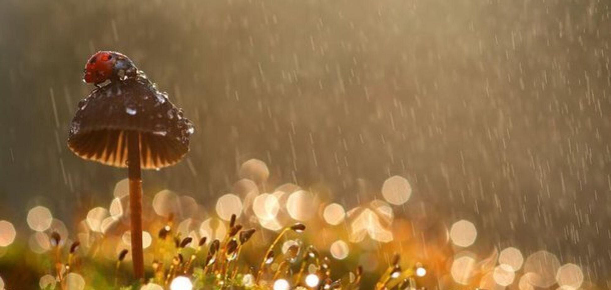 Нужен ли зонт: синоптики дали свежий прогноз погоды в Днепре