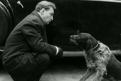 'Семнадцать мгновений весны': как снимали сцену с собакой в фильме. Интересный факт