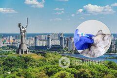 В Киеве выявлен случай бешенства