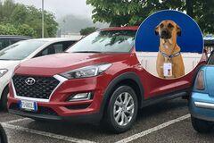 Бездомная собака получила работу в автосалоне Hyundai