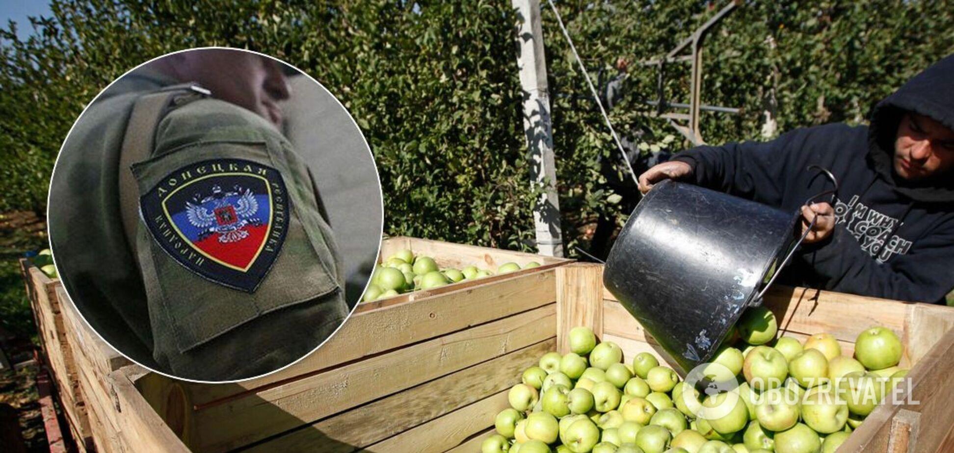 В оккупированной Горловке жителей зовут собирать яблоки в Россию