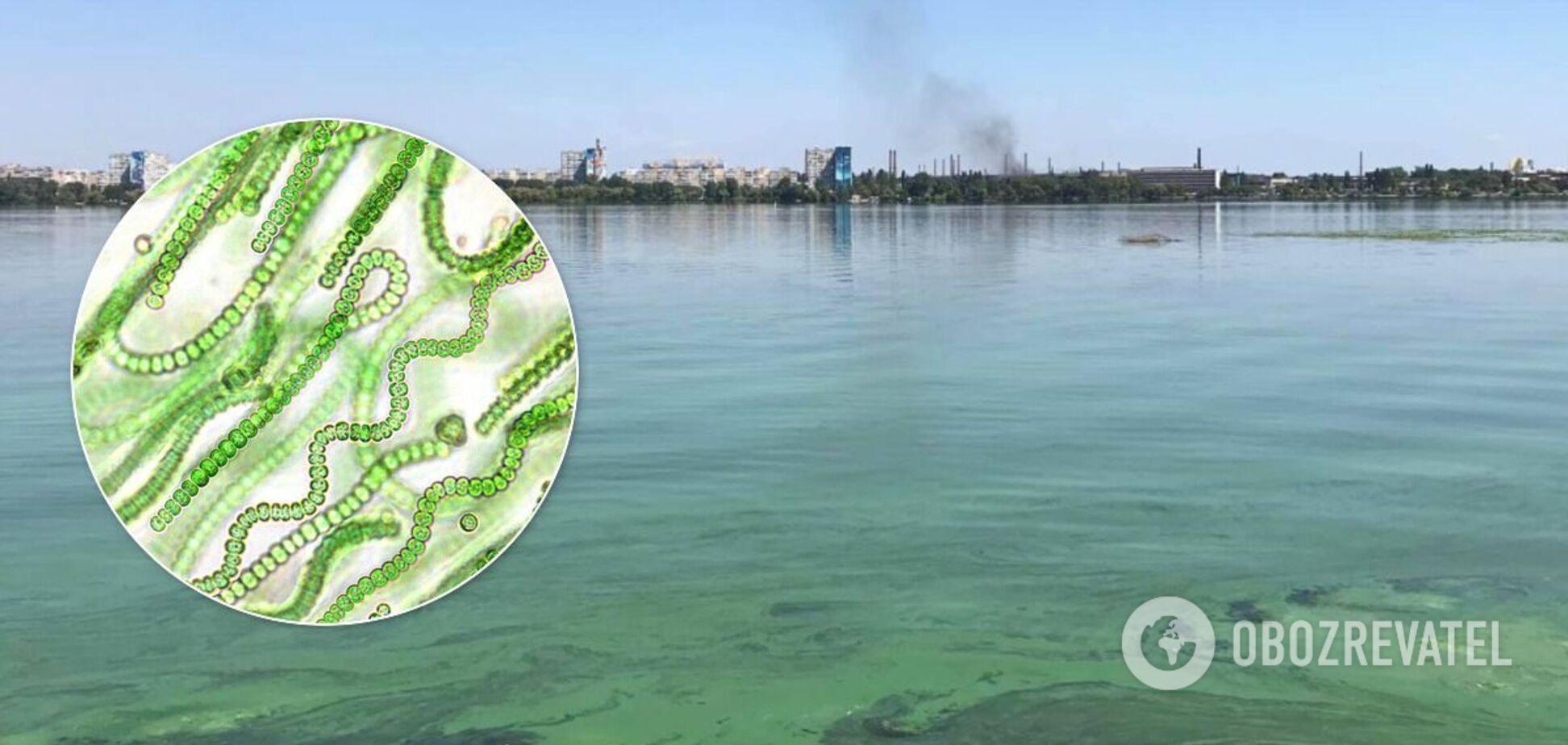 Интоксикация и цианобактерии: экологи объяснили позеленение Днепра и его опасность