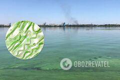 Інтоксикація і ціанобактерії: екологи пояснили позеленіння Дніпра і його небезпеку