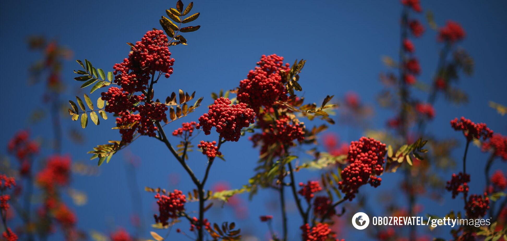 Половина сентября в Украине будет летней: синоптик дал прогноз на начало осени