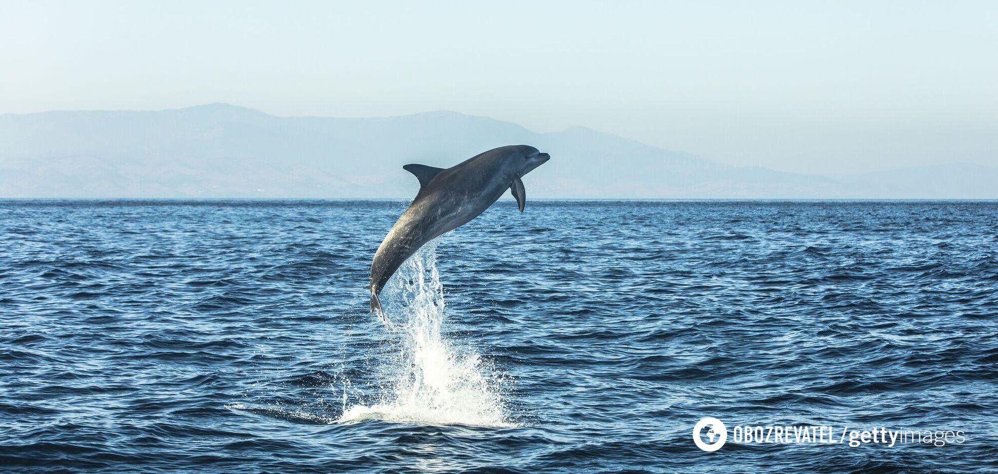 Дельфины развлекали отдыхающих в Бердянске