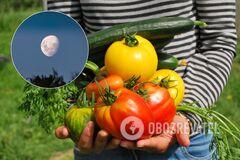 Календарь садовода-огородника на сентябрь 2020: когда и что сажать и удобрять