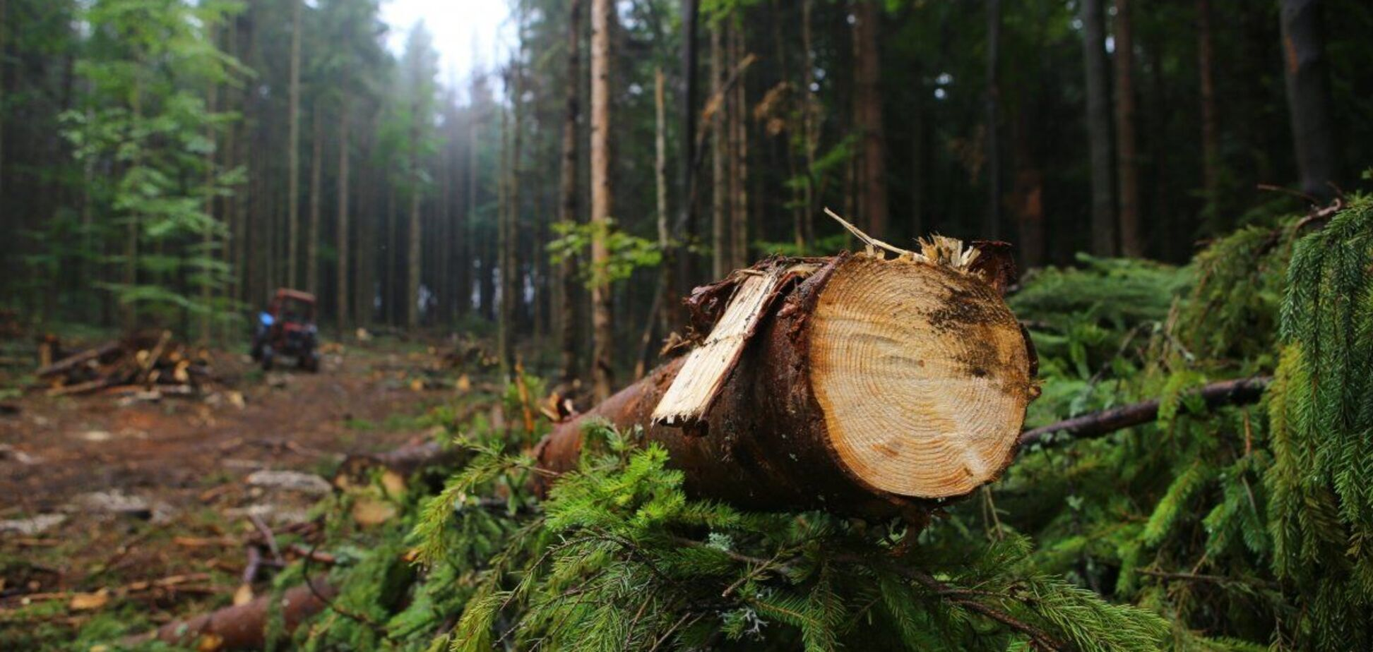 Двум областям Украины предсказали полное исчезновение лесов