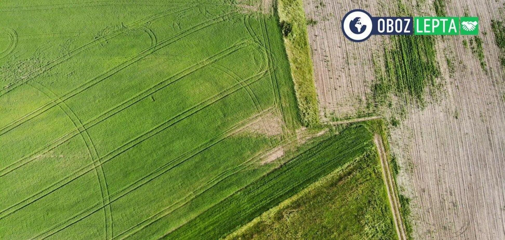 Соціальний урожай: чому агробізнес повинен допомагати суспільству