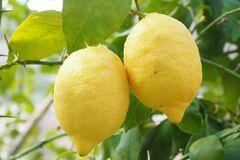 Лимон помогает усвоению организмом железа