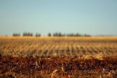 Нацакадемия аграрных наук скрыла 145 тысяч га земли: выдвинуто громкое обвинение