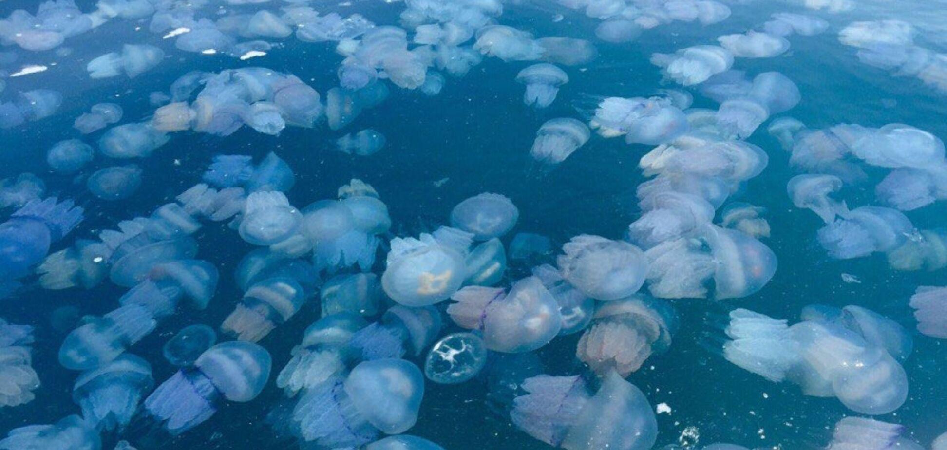 У курортній Кирилівці на пляжі знайшли 'кладовище медуз'