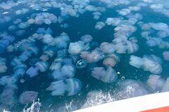 В курортной Кирилловке на пляже нашли 'кладбище медуз'