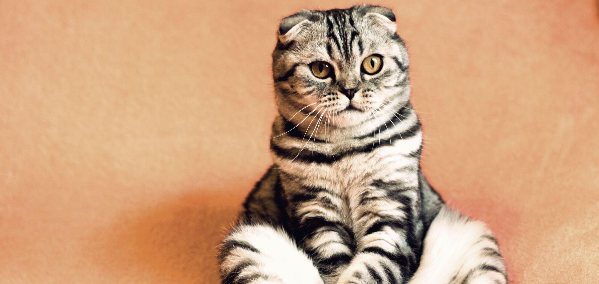 Всемирный день кошек отмечается с 2002 года