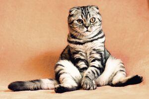 Всесвітній день кішок відзначається з 2002 року