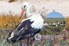 В Одесской области град убил 10 аистов, одна птица– ослепла. Фото