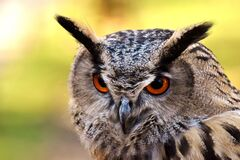 Пост о сове собрал более тысячи лайков, множество комментариев и ретвитов