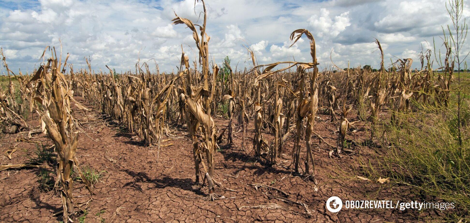 Українські фермери почали вимагати допомогу через посуху