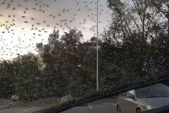 На Красноярск обрушились насекомые