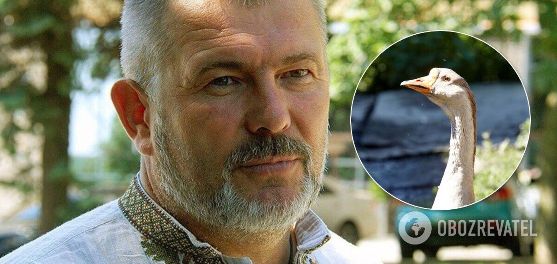 На Днепропетровщине экс-нардепа Березу избили из-за гусей