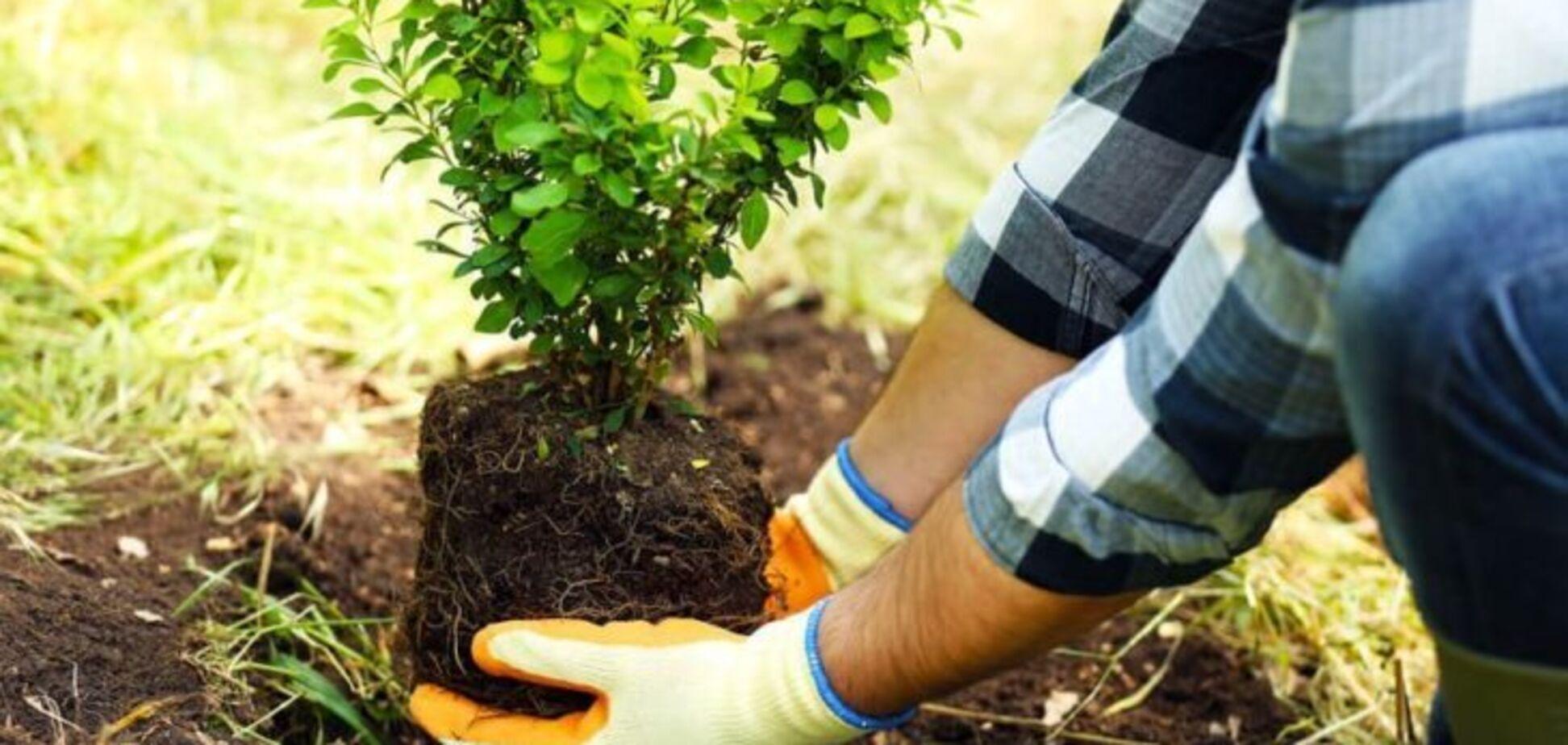 С 10 октября в Днепре начнется месячник озеленения