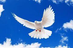 День мира отмечается 21 сентября