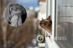 В Днепре мужчина выбросил кота из окна девятого этажа