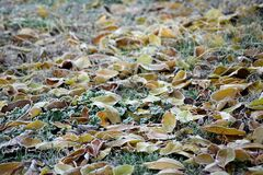 В субботу в Украине прогнозируют заморозки