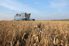 Урожай зерновых под угрозой