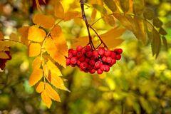 Что отмечают 23 сентября: приметы и праздники