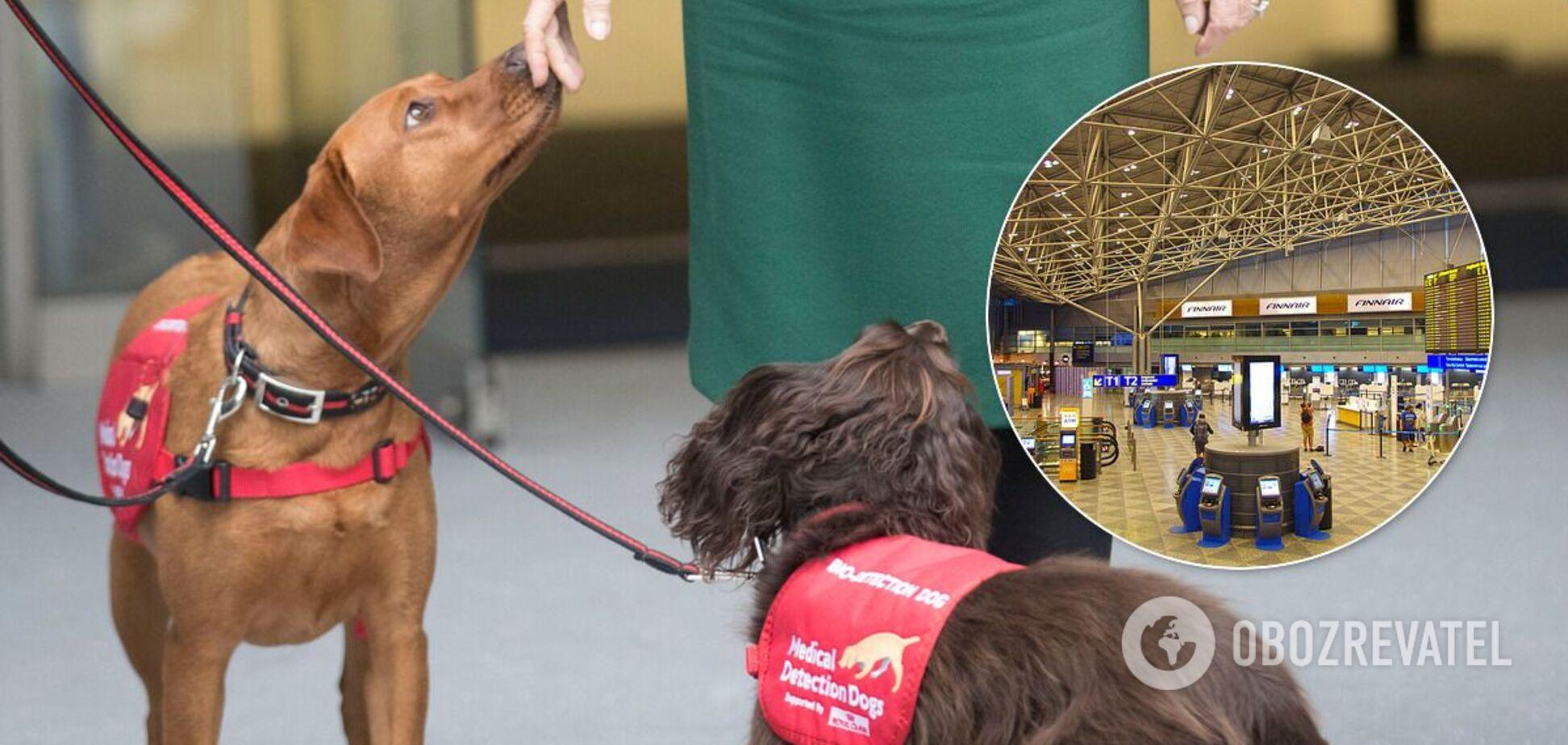 В аэропорту Хельсинки собаки будут определять зараженных COVID-19