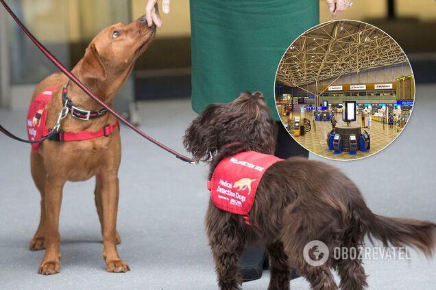 В аеропорту Гельсінкі собаки визначатимуть заражених COVID-19