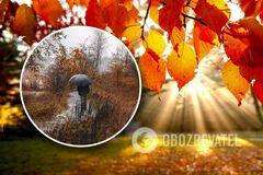 Осень-2020 в Украине