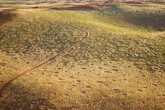 'Ведьмины круги' в Африке расположены в пустыне Намибии