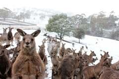 В Австралии внезапно выпал снег
