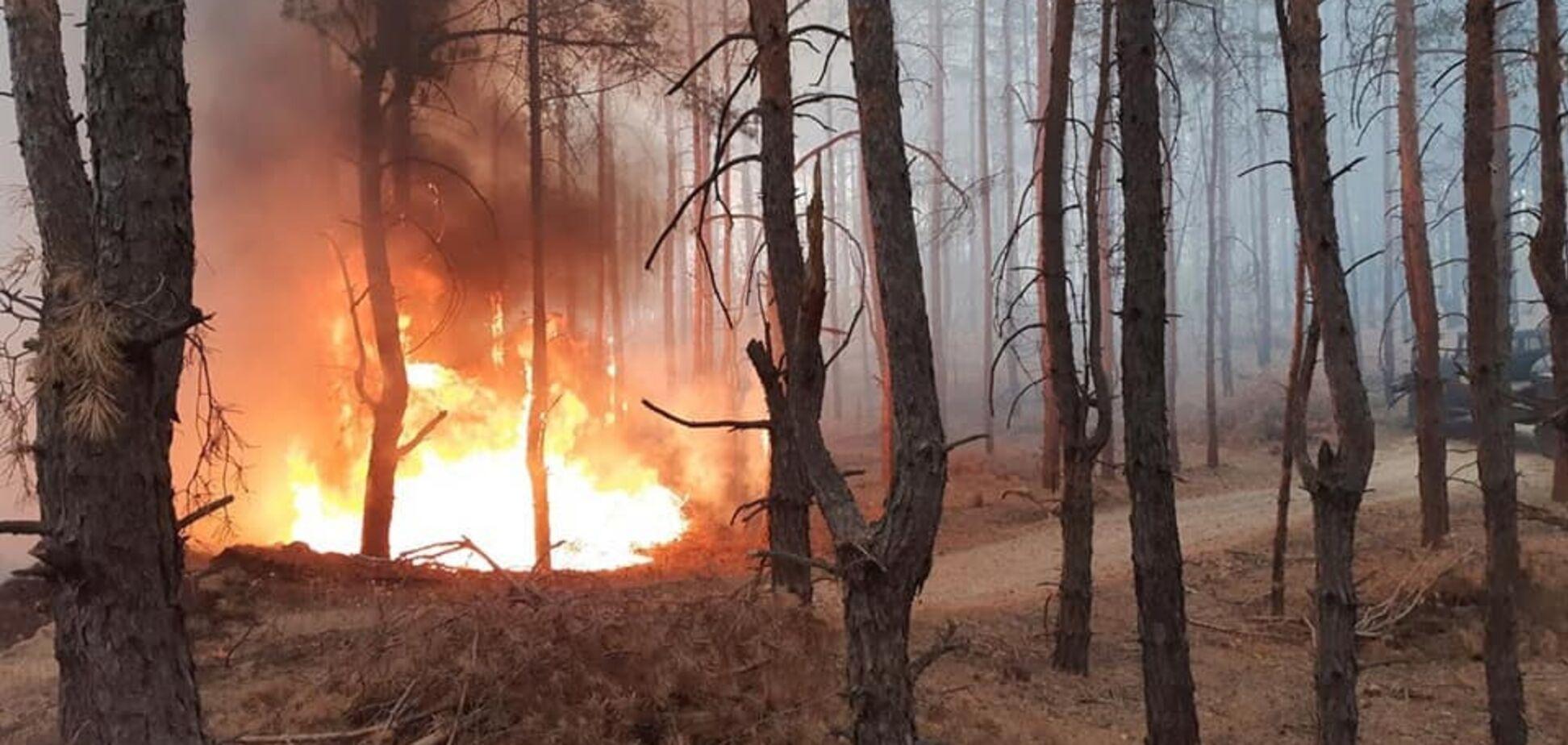 Під Дніпром спалахнула масштабна лісова пожежа. Фото