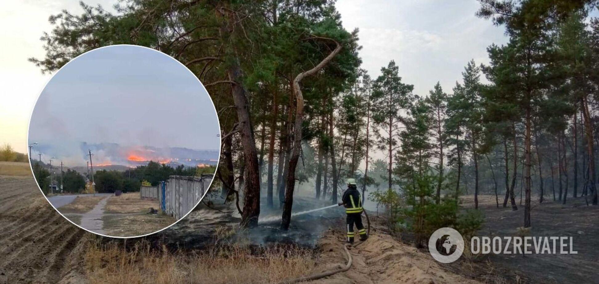 На Луганщине загорелись 20 га леса: пожар тушат уже второй день. Фото