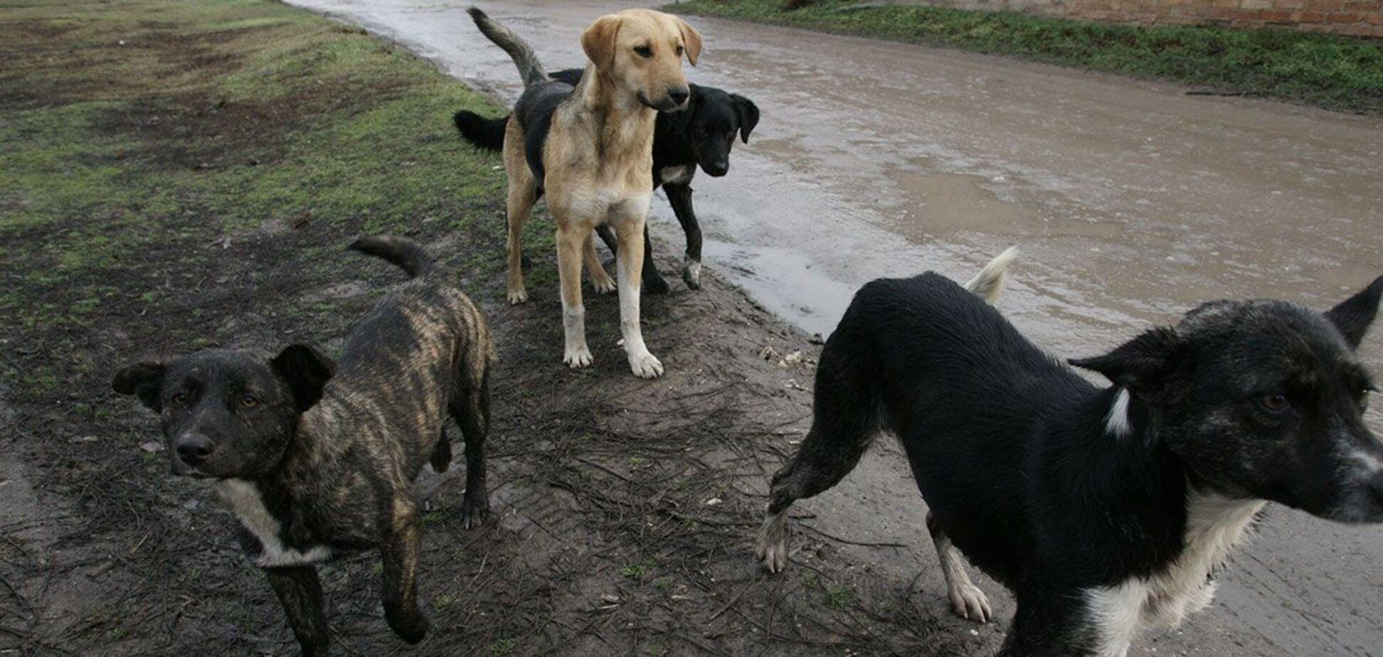 На Одесщине задержали депутата по подозрению в убийстве пяти собак