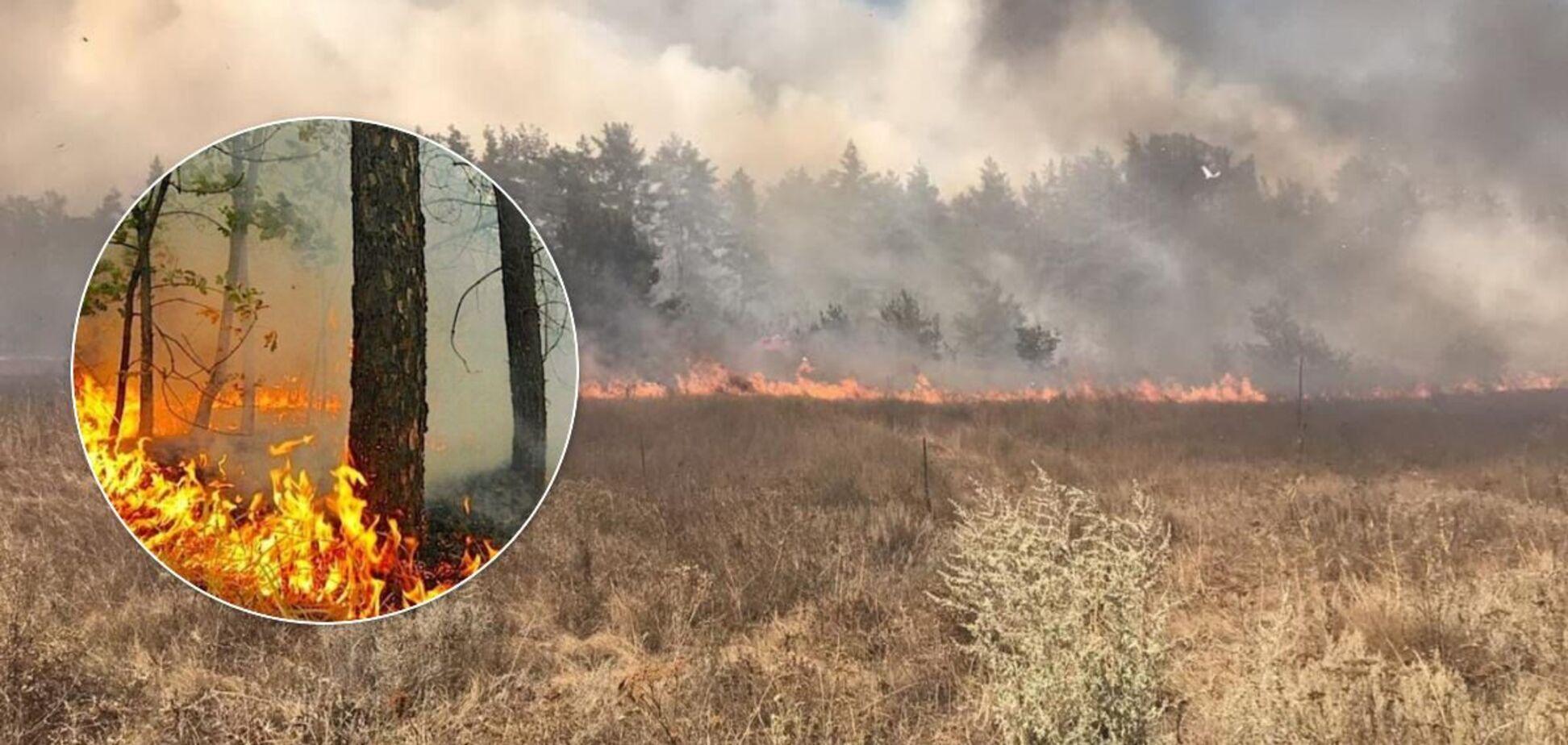 У Росії на кордоні з Україною спалахнули лісові пожежі: є жертви. Фото і відео
