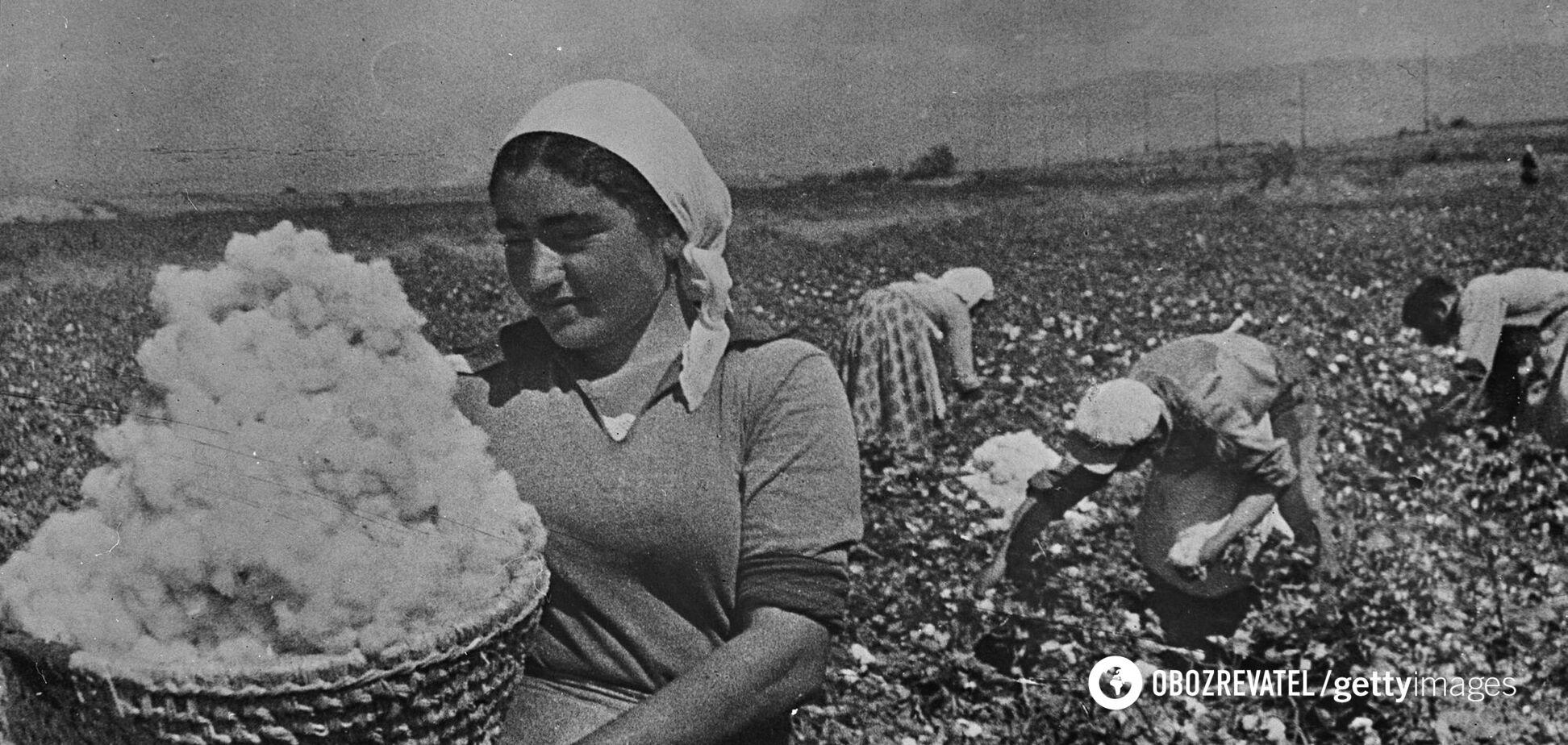 Сбор урожая хлопка в Армении