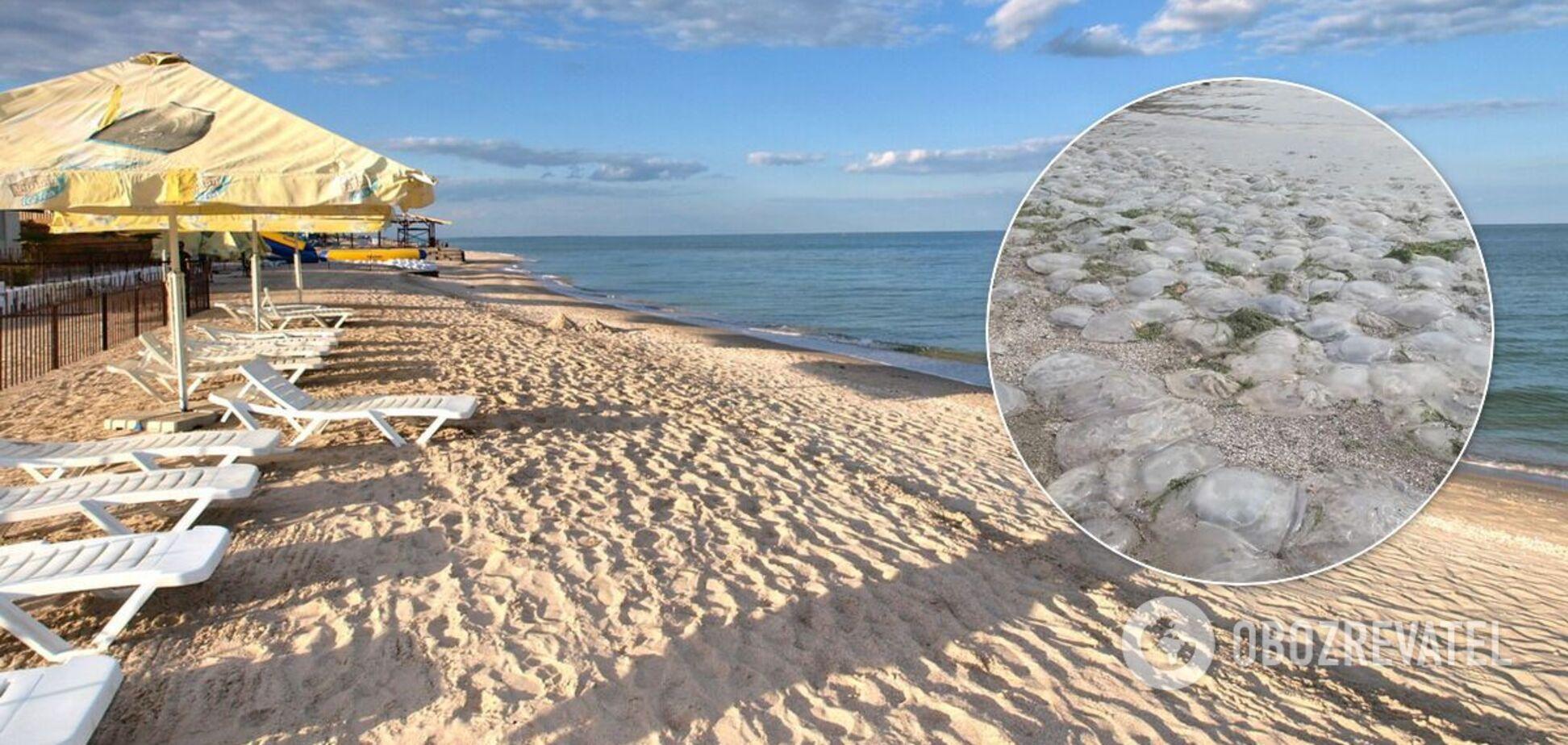 Медузи на пляжі