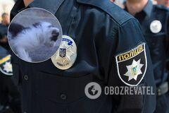 На школьников подали в полицию за спасение котенка