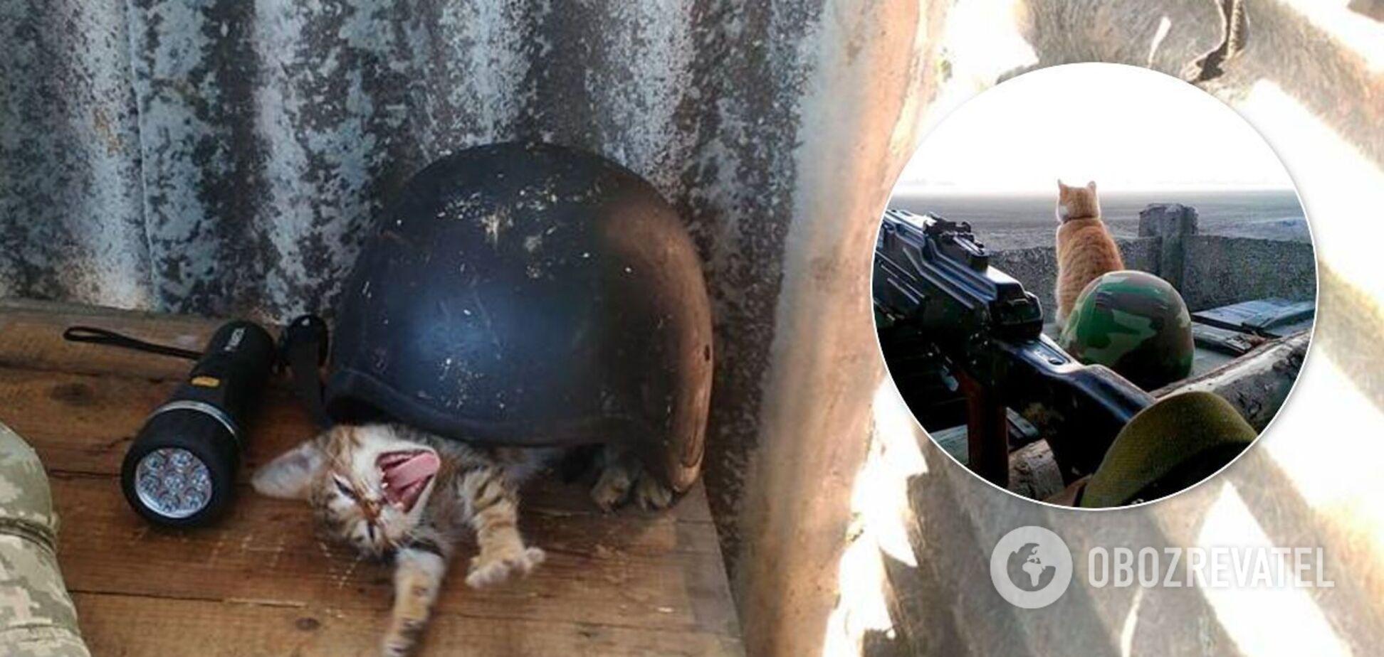 Коты украинских воинов на Донбассе