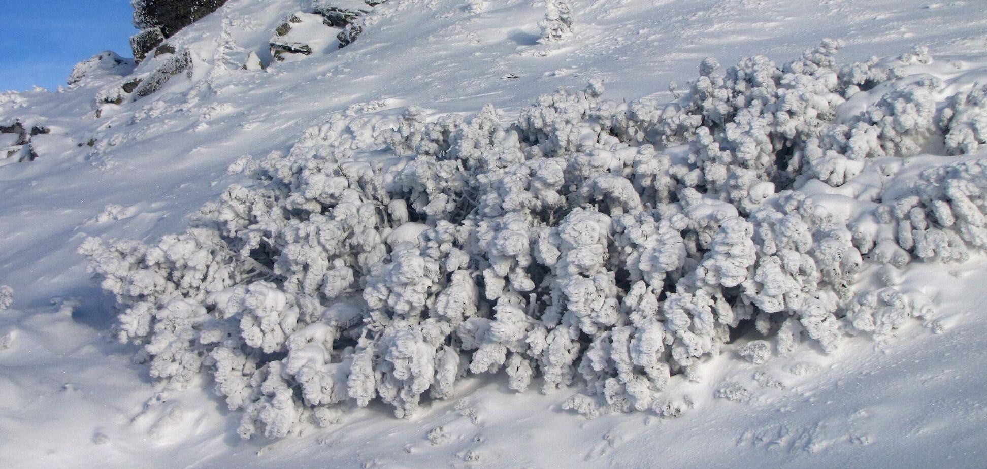 Найбільше снігу випало в районі станції 'Плай'