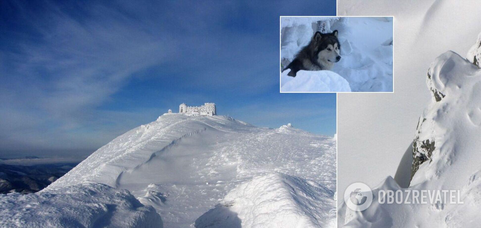 Карпати засипало снігом: у мережі показали справжню зиму