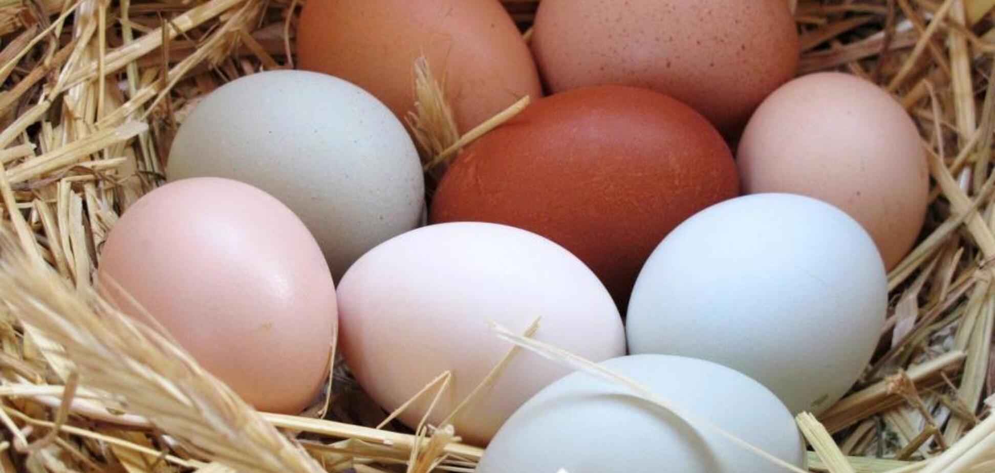 Названо три причини подорожчання яєць в Україні
